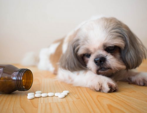 5 Tips for Using Nutraceuticals and Over-the-Counter Medications in Your Pet