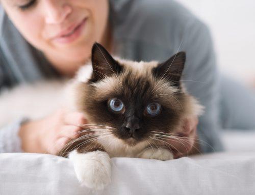 Your 2021 Healthy Pet Checklist