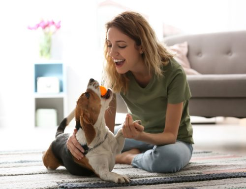 6 Ways to Express Love to Your Pet