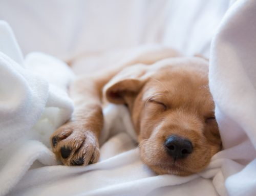 4 Tips to Set Your Puppy Up for Success