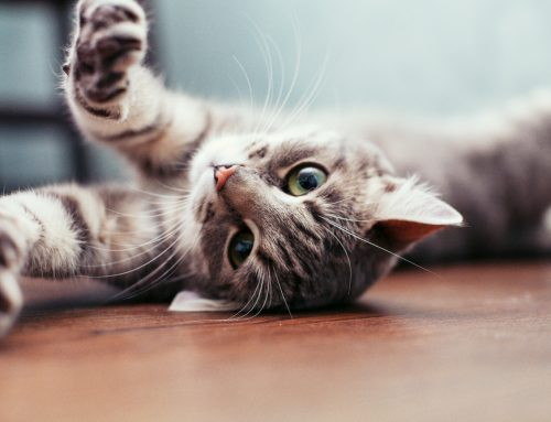 New Cat? 5 Tips to Make Your Home a Feline Paradise
