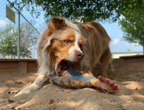 Enrichment Activities for Pets